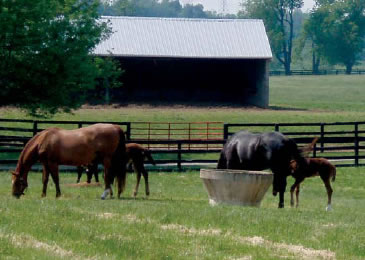 Winter Quarter Farm