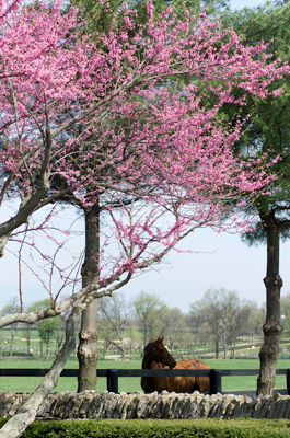 Horse on Fayette County Farm | Photo Courtesy of Jeff Rogers, jeffrogers.com