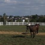 Farmland and Sprawl