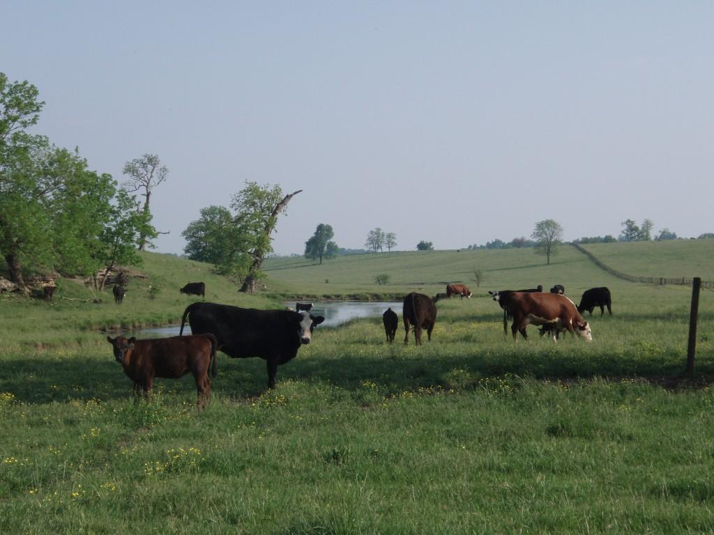 Fayette County Farm